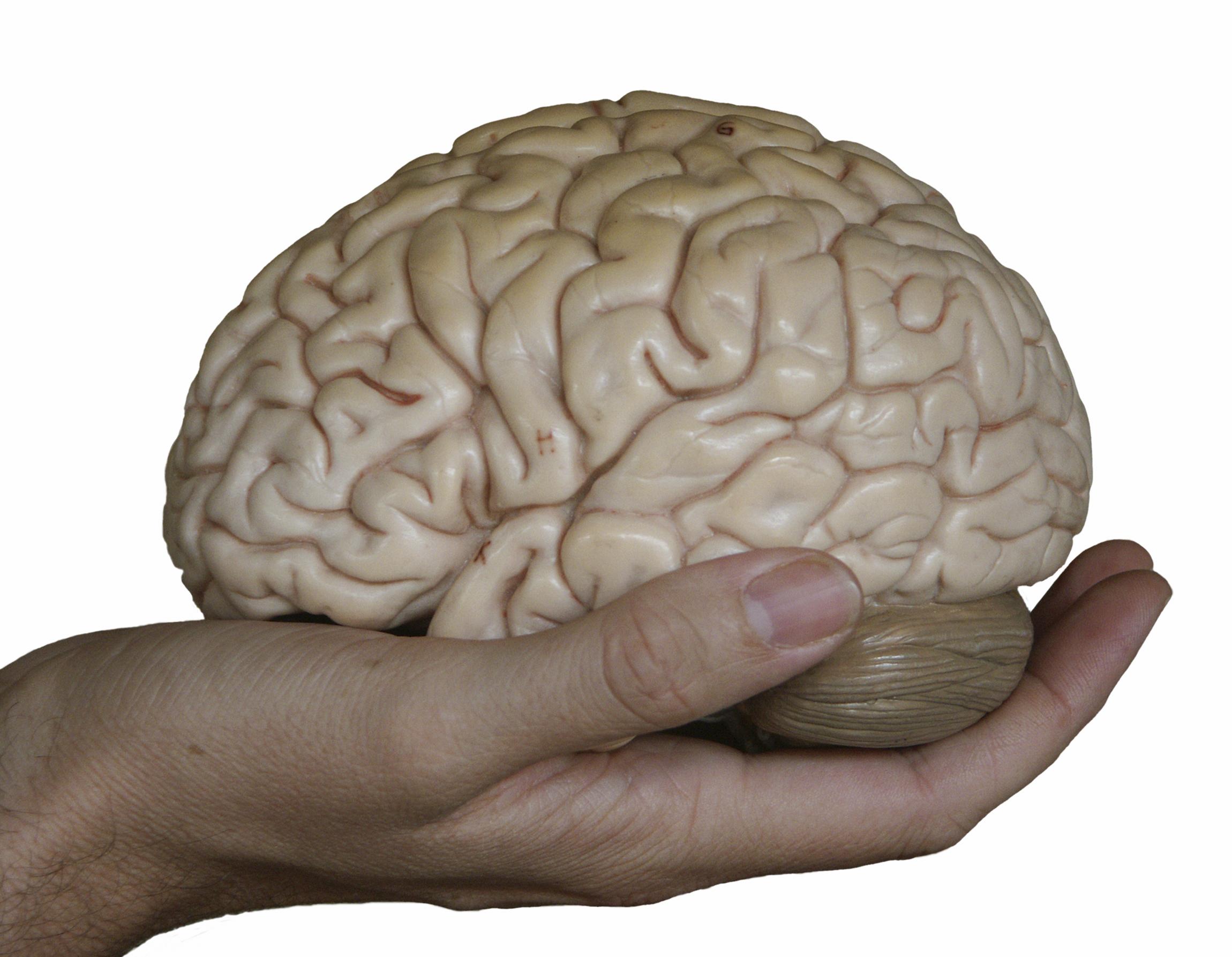 Как улучшить память и работу мозга